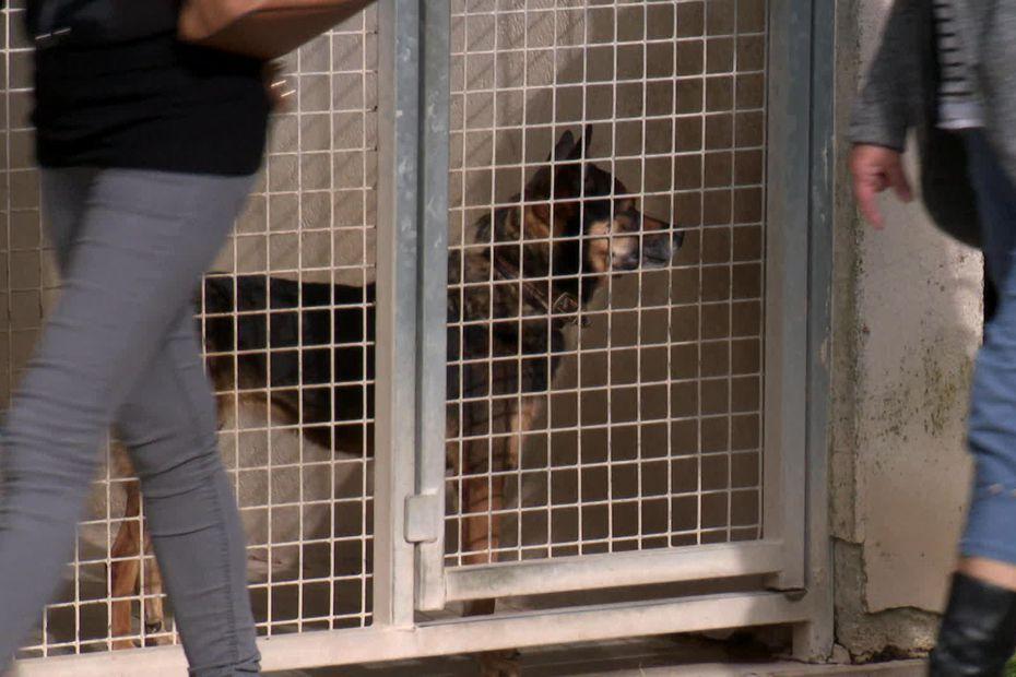 La SPA de Verson ouvre ses portes, près de 200 chats et chiens cherchent une famille d'adoption